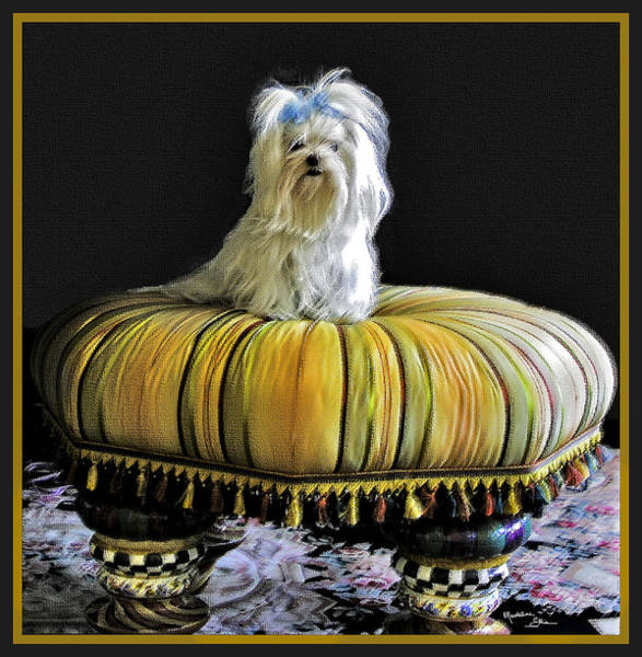 Wall Art - Photograph - Chloe On Her Tuffet by Madeline Ellis