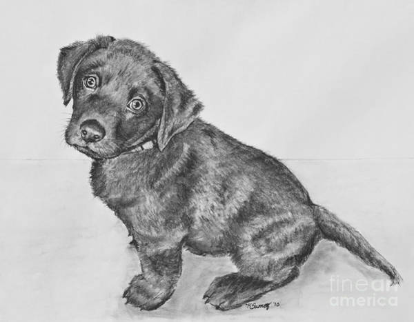 Drawing - Chocolate Lab Puppy Artwork by Kate Sumners