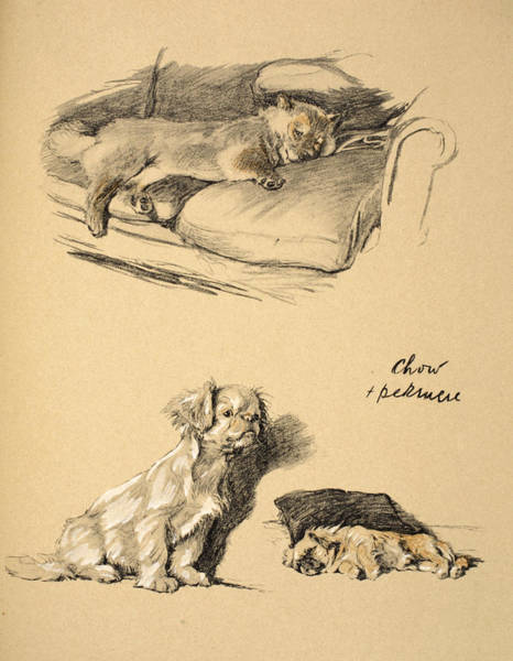 Wall Art - Drawing - Chow And Pekinese, 1930, Illustrations by Cecil Charles Windsor Aldin