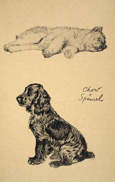 Pet Portrait Drawing - Chow And Spaniel, 1930, Illustrations by Cecil Charles Windsor Aldin