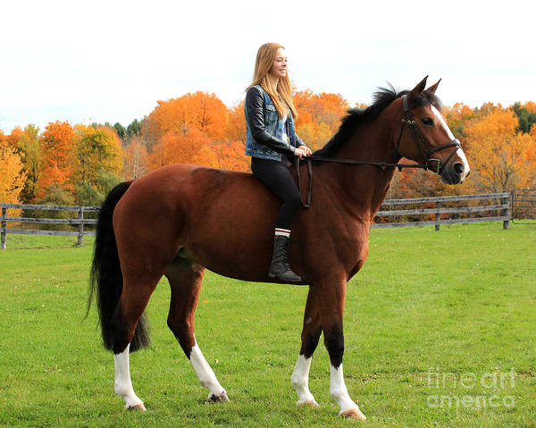 Photograph - Christine Bailey 24 by Life With Horses