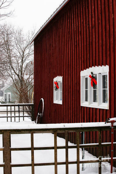 Photograph - Christmas Barnyard by Linda Shafer