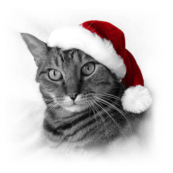 Photograph - Christmas Cat 1 by Helene U Taylor