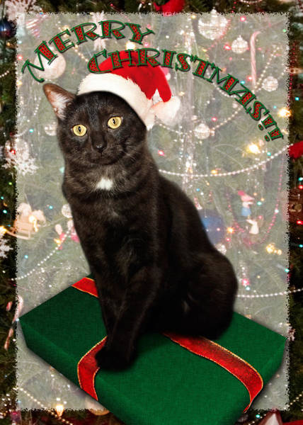 Photograph - Christmas Cat by Adam Romanowicz