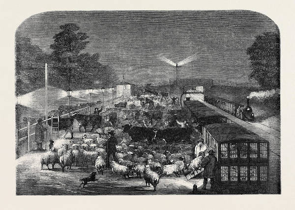 Wall Art - Drawing - Christmas Cattle Arriving At Tottenham Station by English School