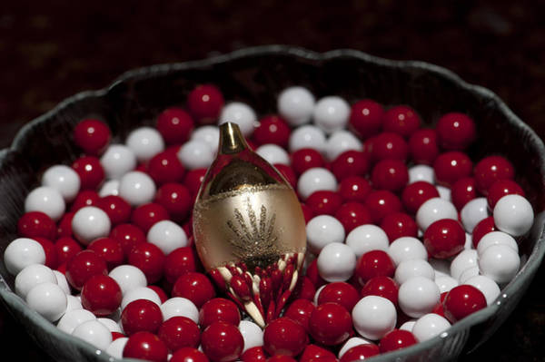 Photograph - Christmas Colors by Melany Sarafis