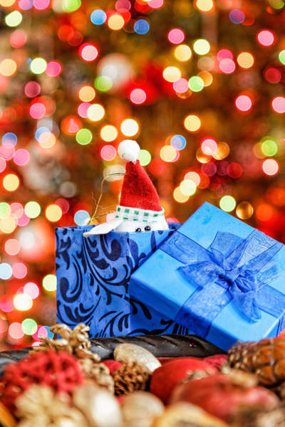 Photograph - Christmas Dog In Box by Peter Lakomy