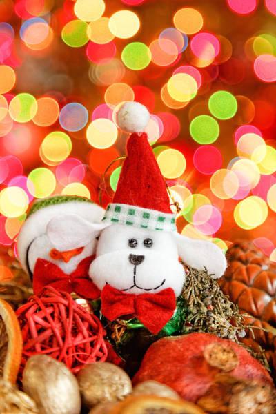 Photograph - Christmas Dog by Peter Lakomy