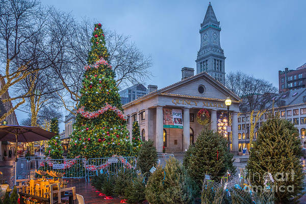 Photograph - Christmas Forest At Quincy Market by Susan Cole Kelly