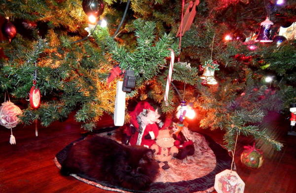 Photograph - Christmas Kitty by Wild Thing