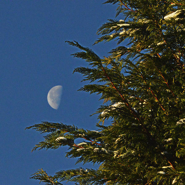 Photograph - Christmas Moon Tree by Bill Swartwout Photography