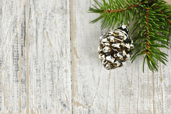 Pine Cones Photograph - Christmas Ornament On Pine Branch by Elena Elisseeva