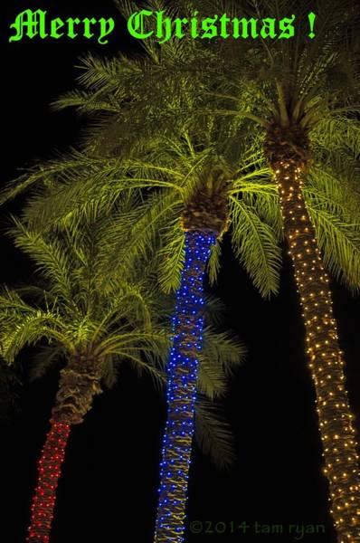 Photograph - Christmas Palms Message by Tam Ryan