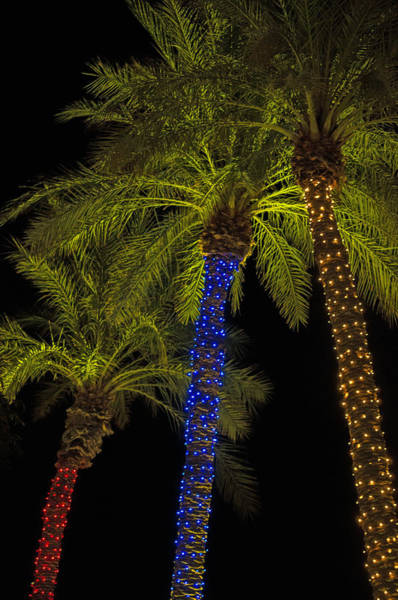 Photograph - Christmas Palms by Tam Ryan