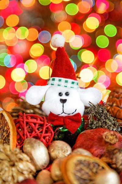 Photograph - Christmas Puppy by Peter Lakomy