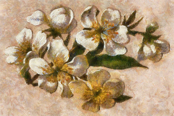 Digital Art - Christmas Roses by Charmaine Zoe