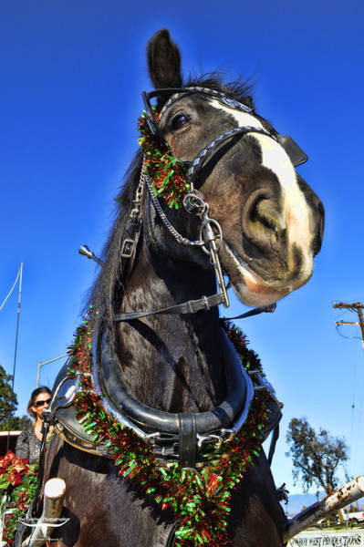 Norco Photograph - Christmas Shire 2 by Tommy Anderson