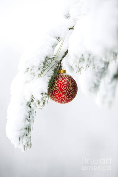 Wall Art - Photograph - Christmas Snow by Diane Diederich