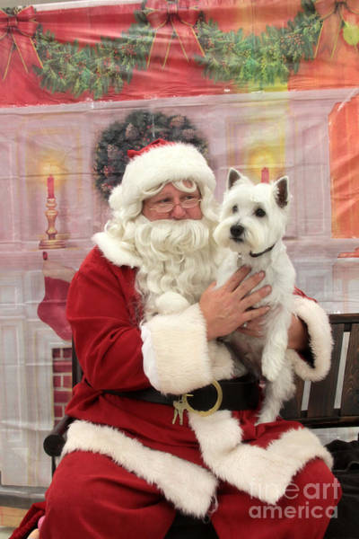 Wall Art - Photograph - Christmas Time With A Pup by Dwight Cook