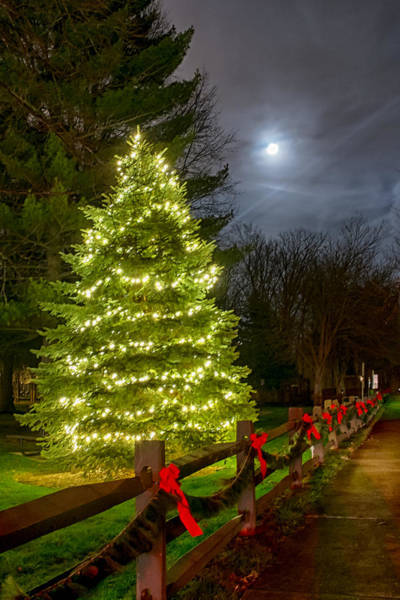 Photograph - Christmas Tree And Full Moon by Richard Kopchock