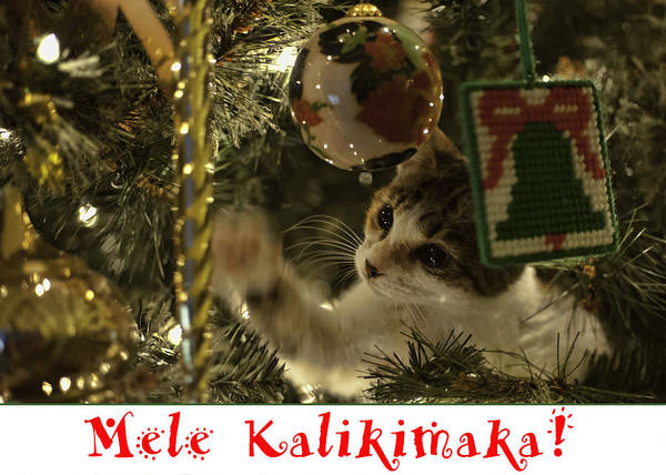 Photograph - Christmas Tree Cat Card by Dan McManus