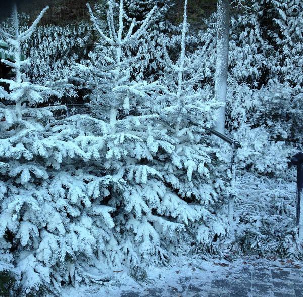 Christmas Tree In The Snow Art Print