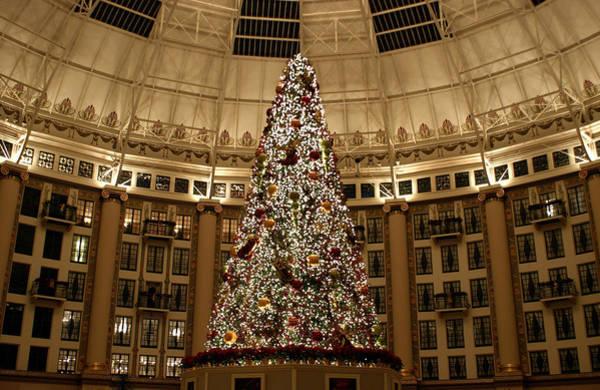 Photograph - Christmas Tree by Sandy Keeton