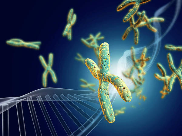 Traits Photograph - Chromosomes With Dna by Harvinder Singh