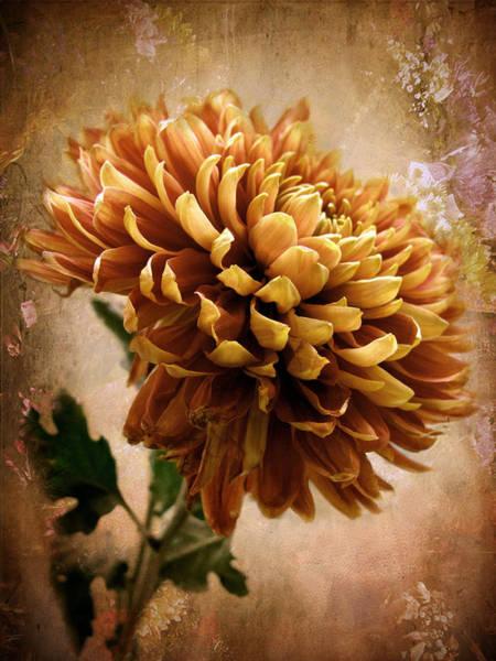 Mum Photograph - Chrysanthemum by Jessica Jenney
