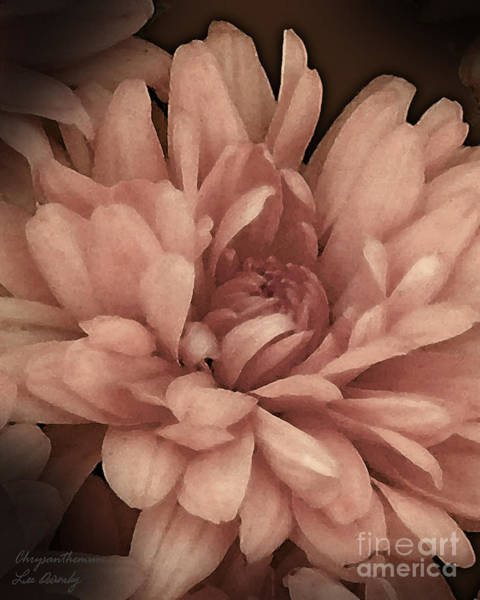 Photograph - Chrysanthemum by Lee Owenby