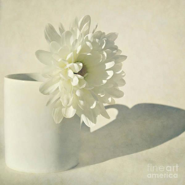 Wall Art - Photograph - Chrysanthemum Shadow by Lyn Randle