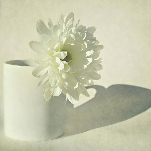 Randle Photograph - Chrysanthemum Shadow by Photo - Lyn Randle