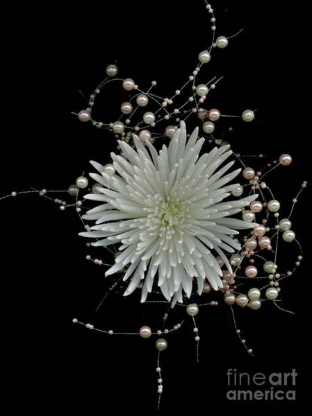 Wall Art - Photograph - Chrysanthemums And Pearls by Nancy TeWinkel Lauren