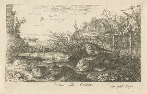 River Bank Drawing - Chub, Squalius Cephalus On A Riverbank, Print Maker Albert by Albert Flamen And Jacques Van Merlen
