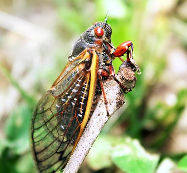 Photograph - Cicada by Candice Trimble