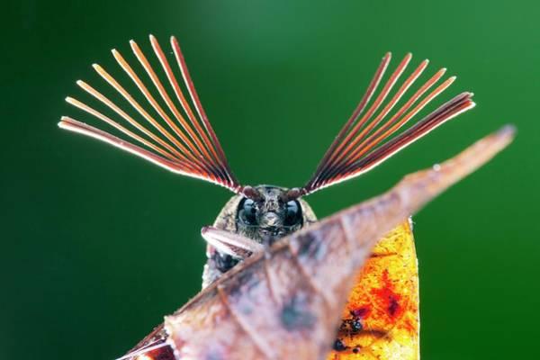 Cicada Wall Art - Photograph - Cicada Parasite Beetle by Melvyn Yeo