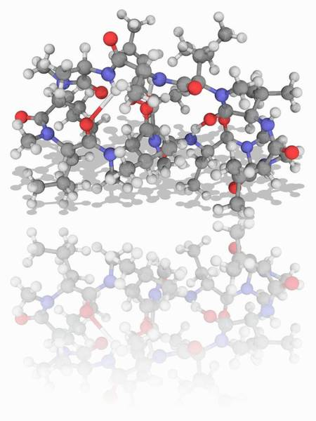 Wall Art - Photograph - Ciclosporin (cyclosporine) Drug Molecule by Laguna Design/science Photo Library