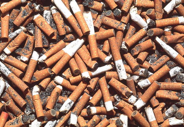 Butt Photograph - Cigarette Butts by George Bernard/science Photo Library