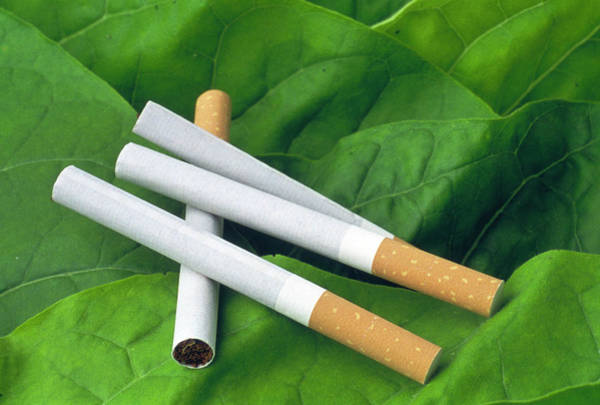 Tobacco Photograph - Cigarettes by Th Foto-werbung/science Photo Library