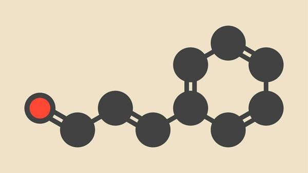 Wall Art - Photograph - Cinnamaldehyde Cinnamon Flavour Molecule by Molekuul/science Photo Library