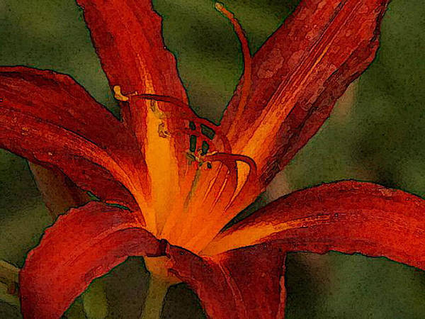 Photograph - Cinnamon Lily by Denise Beverly