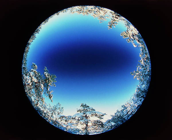 Fish Eye Lens Photograph - Circular Fish-eye View Of Snowy Trees & Blue Sky by Pekka Parviainen/science Photo Library