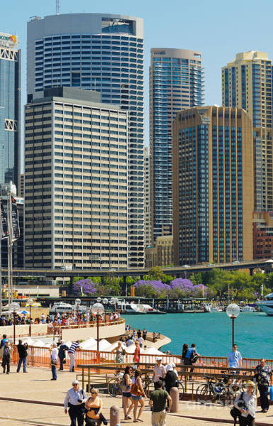 Circular Quay - Sydney - Australia - With Skyscrapers And A Hint Of Purple Jacaranda Art Print