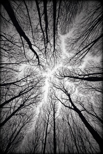 Ceiling Photograph - Circulatory System Of The Forest by Alexandr Popovsky