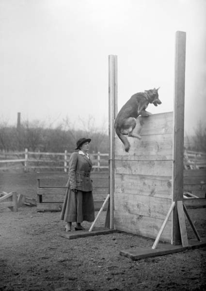 Wall Art - Photograph - Circus Dog, C1914 by Granger