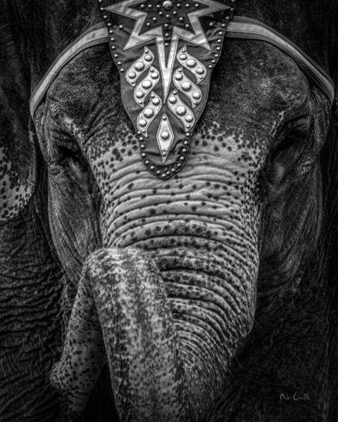 Wall Art - Photograph - Circus Elephant by Bob Orsillo