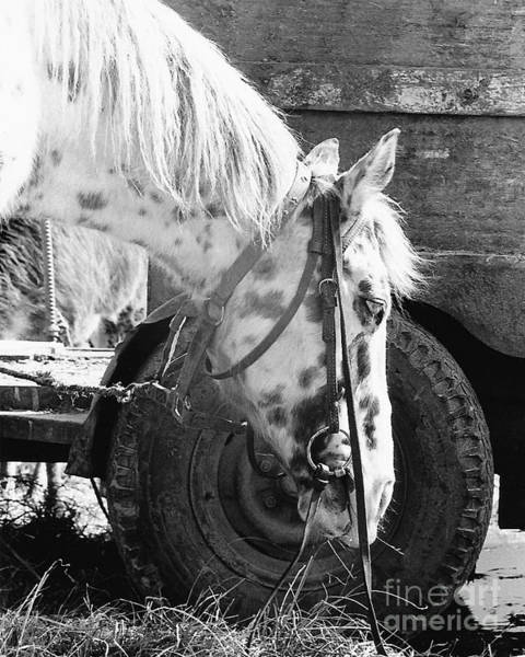 Photograph - Circus Pony by Susan Schroeder