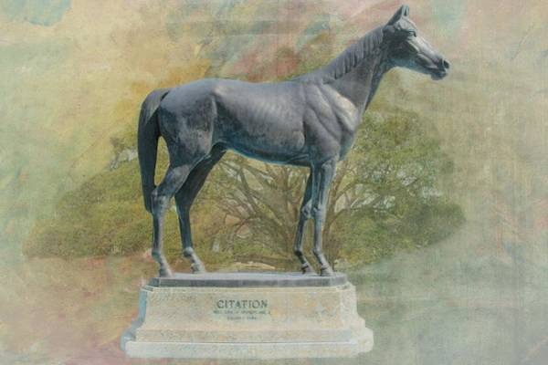 Photograph - Citation Thoroughbred by Rudy Umans
