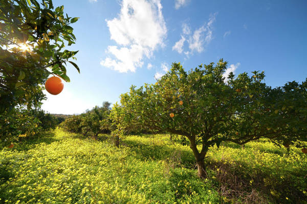 Environmental Issues Photograph - Citrus Grove by Blueplace