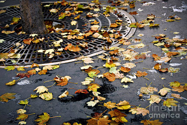 Photograph - City Fall by Elena Elisseeva